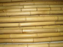 Bambusová tyè  prùmìr 8-10 cm, délka 2 metry vzhledové vady
