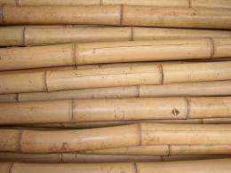 Bambusová tyè 4,5-5,5 cm, délka 2 metry II jakost - vzhledové vady