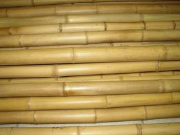 Bambusová tyè 1,5 cm, délka 3 m